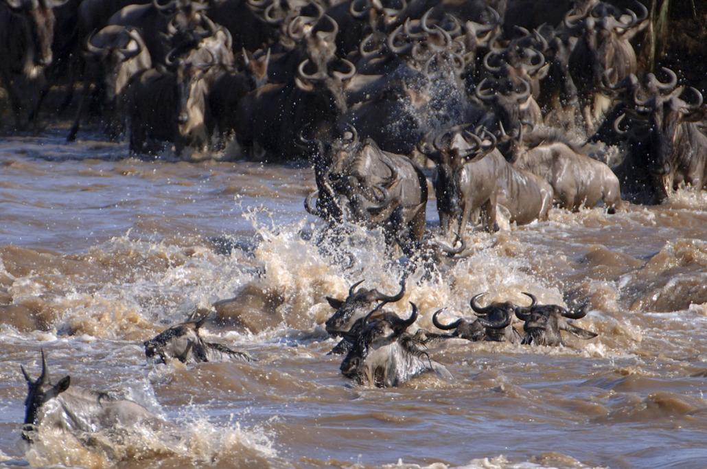 TANZAwildebeestCrossing